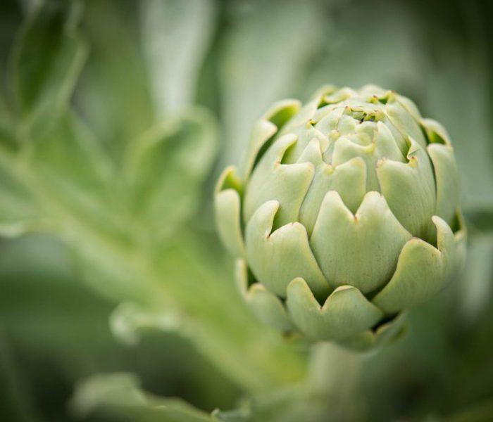 Bianco Tanagro: sempre più green!